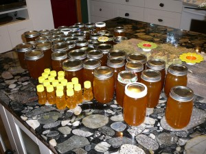 Our  bounty of honey this year, all jarred up