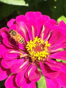 girl flying over a pink zinnia