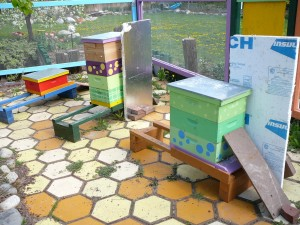 new configuration of all 3 hives