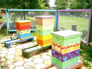 all three hives after adding a box to each. Starting at the left, orange, yellow/FlowHive, and purple