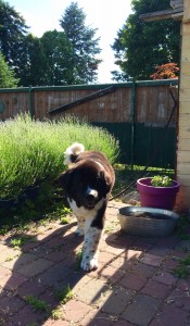 Here is the guardian of our galaxy out patrolling the garden