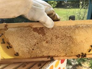 A pretty frame of capped honey