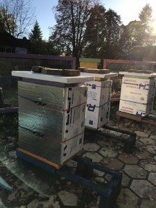 all 3 hives have their winter jackets and hats on. Good luck, girls!